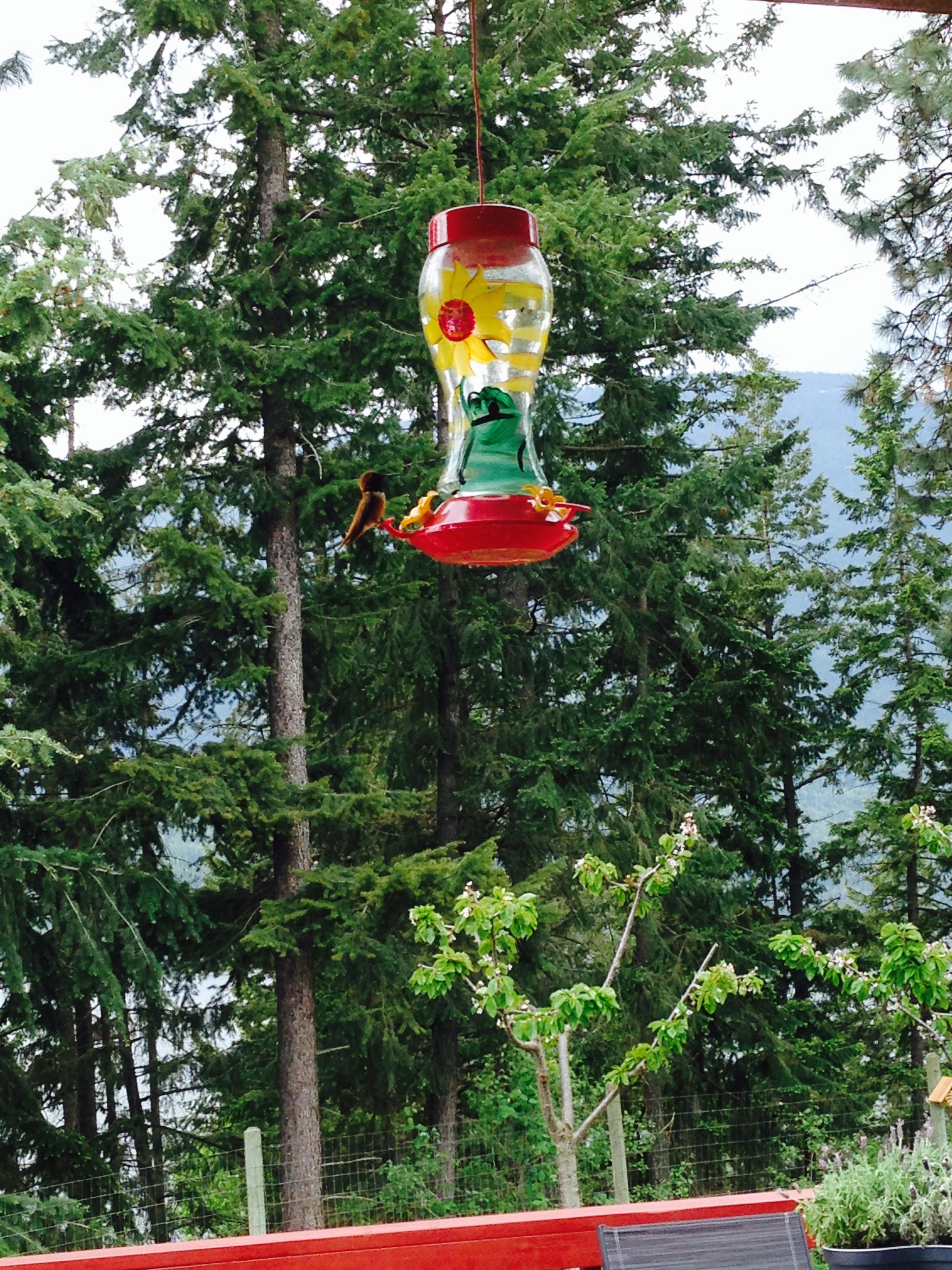 Hummingbird feeder on the deck of Miracle Healing Hideaway